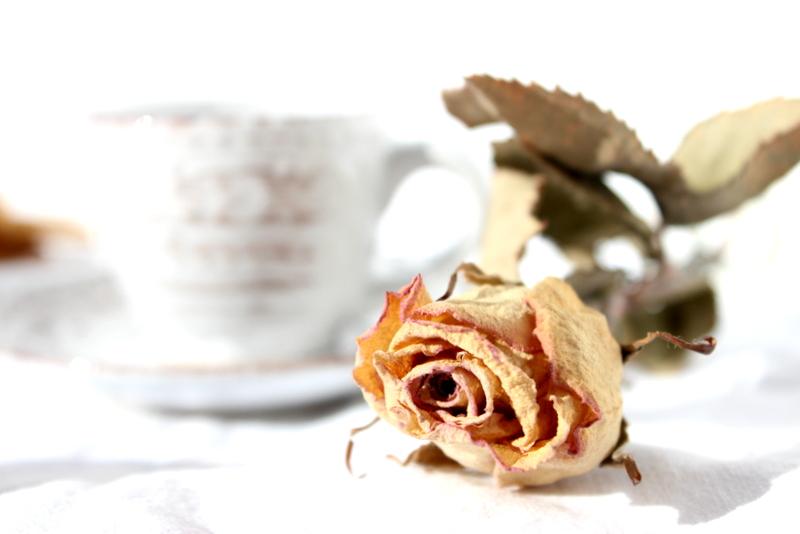 rosa e tazza di caffè